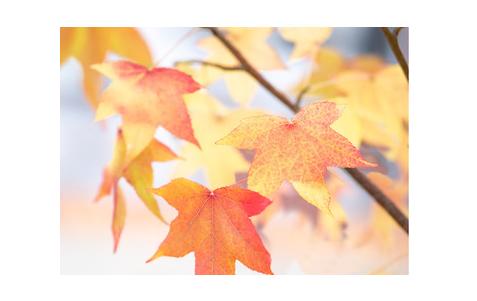 食欲の秋( ´ ▽ ` )